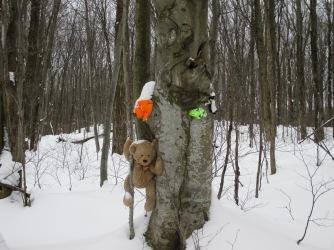 TreeBear2